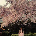 Danshui Cherry Blossoms at Tian Yuan