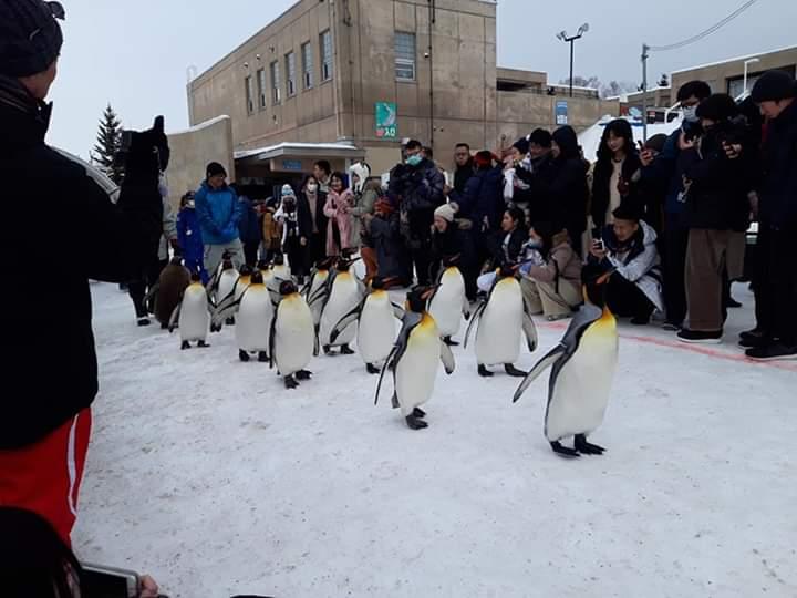 Asahiyama Zoo Penguin Parade
