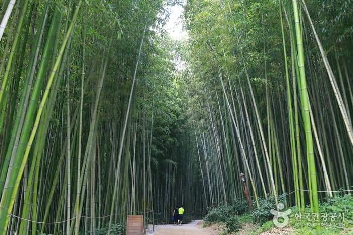 Juknokwon Bamboo Forest