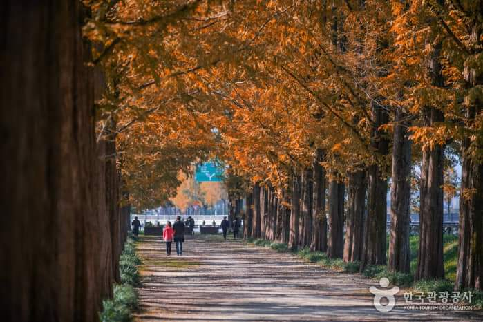 Damyang Metasequoia-lined Road