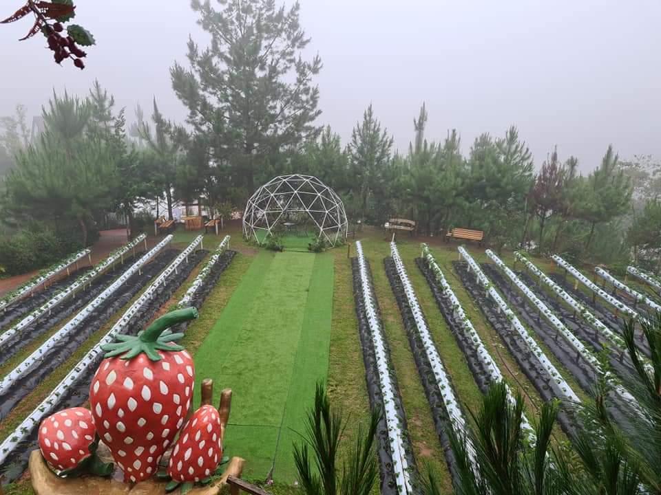 Taglucop Strawberry Hills